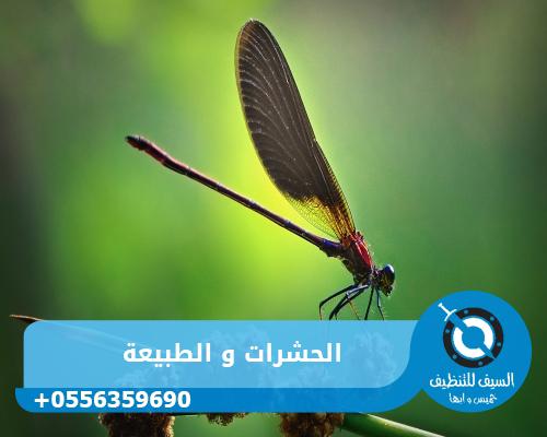 الحشرات و الطبيعة