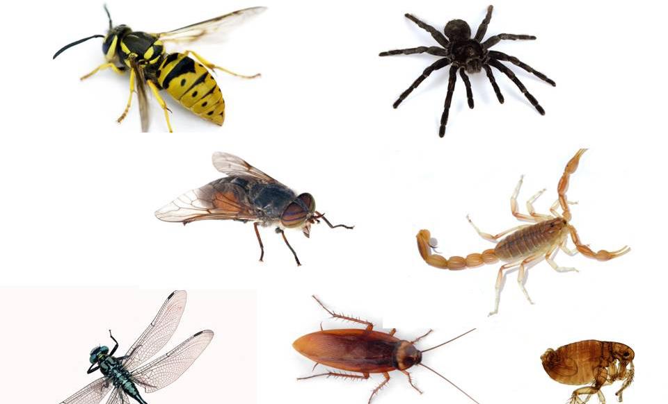 افضل الطرق لحمايه المنزل من الحشرات