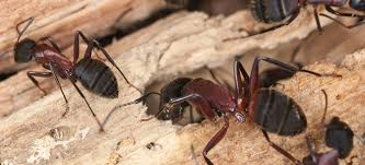 القضاء علي النمل