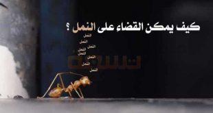 حشرة النمل