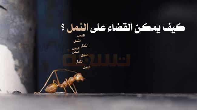 طرق التخلص من حشرة النمل