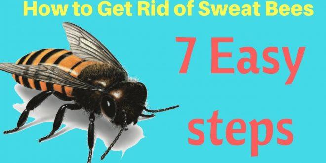 التخلص من النحل