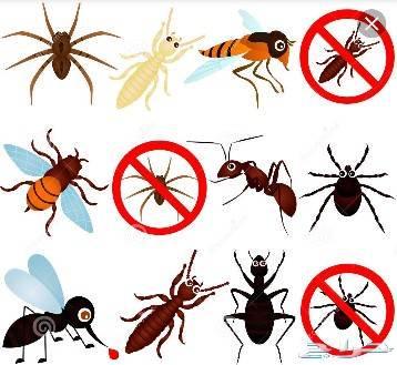 شركه مكافحه حشرات بأحد رفيده 0531493037 ارخص شركة مكافحة الحشرات والقوارض