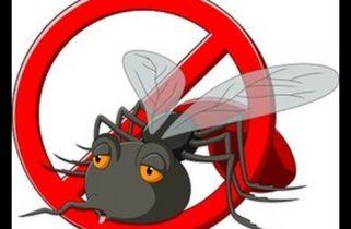 شركة مكافحة الحشرات في سكاكا 0531493037 مكافحة جميع انواع الحشرات نهائيا