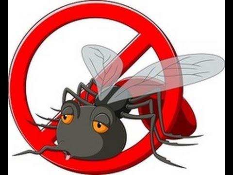شركة مكافحة الحشرات في سكاكا 0531373706 مكافحة جميع انواع الحشرات نهائيا