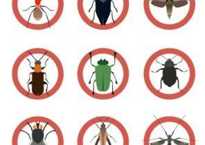 ارخص شركة مكافحة الحشرات بشرورة 0531493037 النمل الابيض – الصراصير – بق الفراش اتصل الآن
