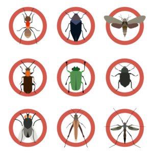 ارخص شركة مكافحة الحشرات بشرورة 0558363402 النمل الابيض – الصراصير – بق الفراش اتصل الآن